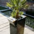 Ashtray Planter with Real Palm