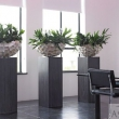 High End Shell Planter with Wooden Pedestal 7