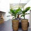 Natural Planters 9