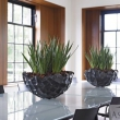 Natural Planters Shell Bowl Black 17