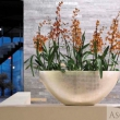 Natural Planters Gold Leaf Finish 22