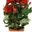 Begonia- Flowering