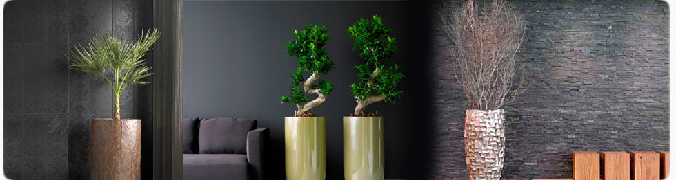 Stunning Office Plants and Flowers  Buy or Rent header image