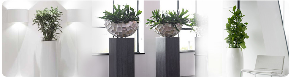Architect Plant Displays