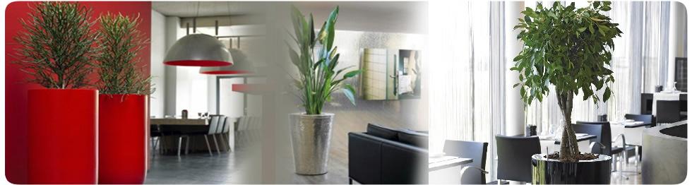 Restaurant Plant Displays