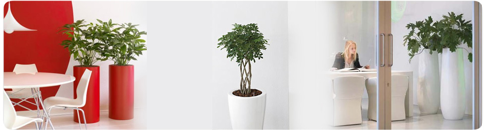 Building Plant Displays