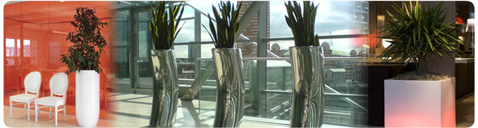 Interior Plant Displays