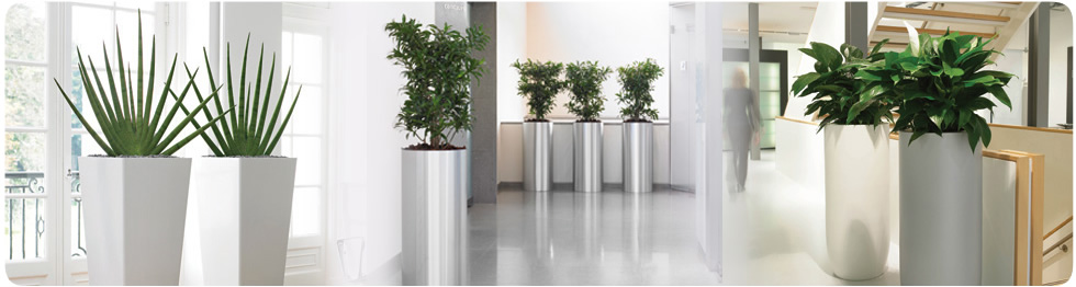 Stunning Office Plants And Flowers Buy Or Rent Rent Or Buy Stunning