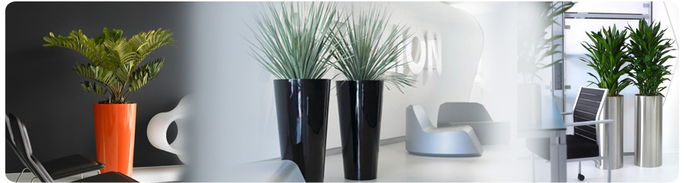 Retail Plant Displays